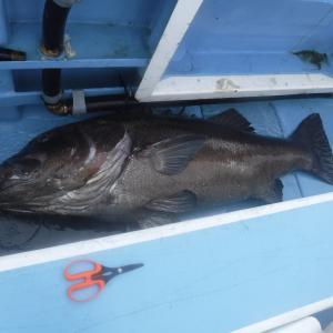 都心から2時間以内の場所で釣れる超大物イシナギ釣りの魅力について (千葉県(外房)勝浦沖)
