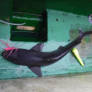 マルキューカップ2020深海魚釣り大会で入賞 東京湾海底谷(相模湾周辺海域)