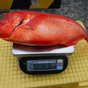 激渋ながらも2キロオーバーキャッチ 伊豆新島周辺のキンメダイ釣り 番匠高宮丸