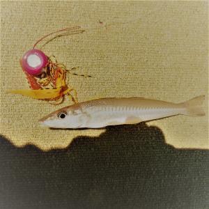 タイラバでシロギスを釣る方法(条件と方法)について