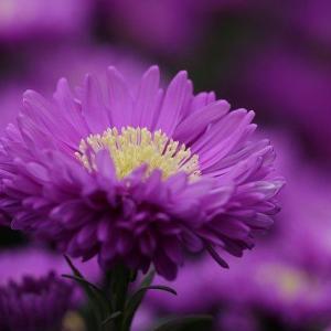 美園さくらと天紫珠李のときめきMomentでわかる二人のヅカオタ度
