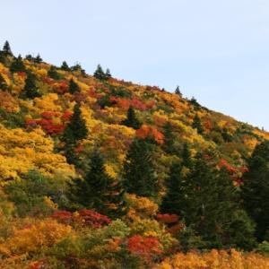 八甲田山の紅葉狩りは混雑する?混雑の傾向と対策を知って行きたい!