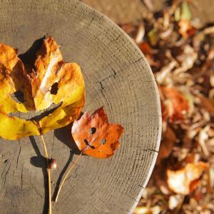 子どもと落ち葉でアートを楽しめる?!簡単な工作の方法をマスター!