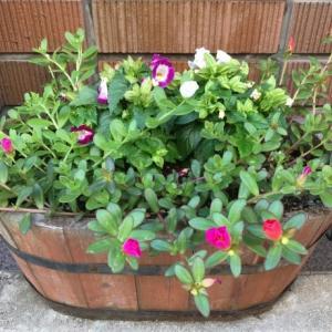 植木鉢のサイズ、どう決める?!自分に合うものが買える選び方とは?