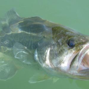 初冬のバス釣りはうまくいかない?!ルアーでうまく釣る方法はない?