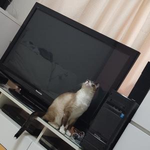 愛猫観察日記?