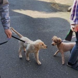 初めてのお散歩の様子