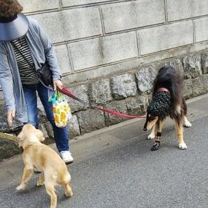 なかなか会えない大型犬