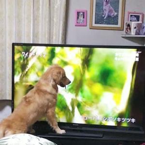 テレビにくぎ付け!