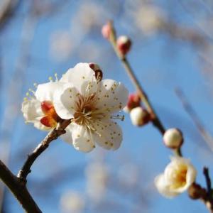 ♪もうすぐ春ですねぇ~