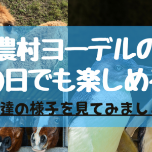 【峰山高原】神崎農村ヨーデルの森は「雨の日」でも楽しめるのか?   園内の様子をご紹介