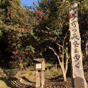 千ヶ峰/関西百名山〔ルート〕三谷コースピストン|関西登山記