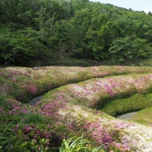 生駒山/関西百名山〔ルート〕なるかわ谷コース~|関西登山記