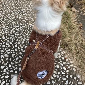 犬のさんぽに活躍のプチプラの服は国産☆彡