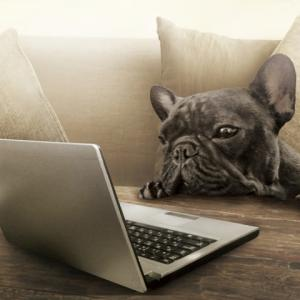 hspはWebデザイナーに向いてる!未経験からの転職方法を教えます。