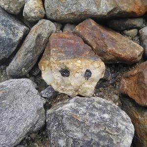 顔に見える石というだけで少し嬉しい