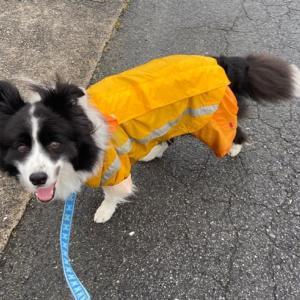 雨が降ってからのお散歩♪