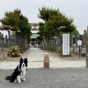 大石神社さんと音もなく忍び寄る影♪