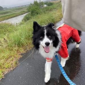 梅雨らしい梅雨♪