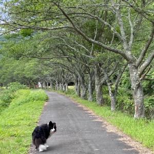 ロッキーの散歩コースは、とってもすてきな散歩コース♪