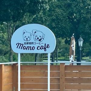 モモカフェ♪