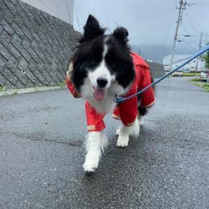 ロッキーといると雨も楽しい♪