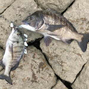 【チヌを釣るのだ!・第2話】はじめてのチニングでの釣果は…?ホッパー最強!?