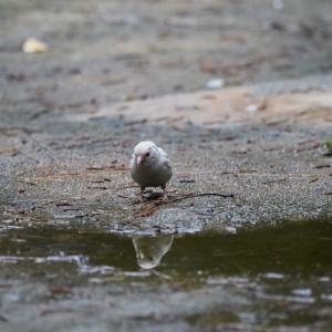 真っ白なスズメに会いにいってきた話