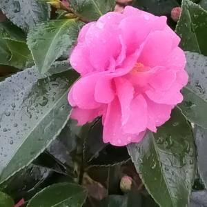 1日1個!英単語&会話フレーズ〜学習メモ:雨がしとしと降っている/小雨が降っている