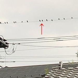 鳥のフン害対策を知っていますか?お困りの方は電力会社へ!