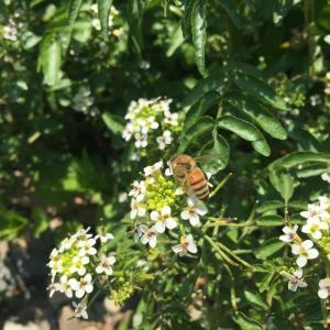 蜂の写真を撮った。