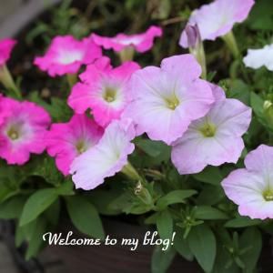 ☆今日の庭花 そして やっと娘に会えて・・・~*・゚♡