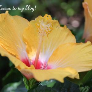 ☆ 今日の庭花 と 幸せを感じる時 ・・・~*・゚♡