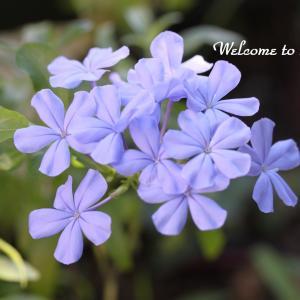 ☆ 新総理の名前と 庭の花たち ・・・~*・゚♡