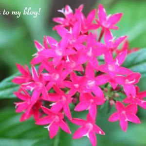 ☆ 庭に咲く 赤い花を 集めてみました  ・・・~*・゚♡