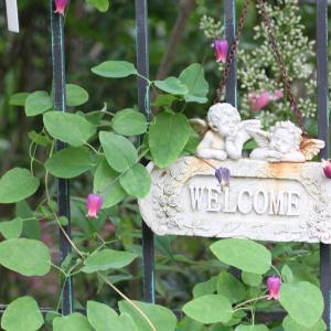 ☆ 庭のクレマチス ニオベなど・・③ ~*・゚♡