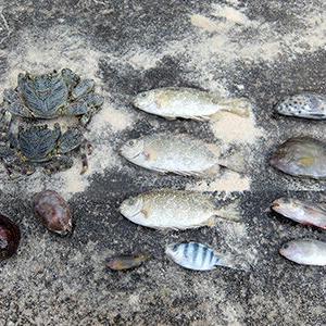 沖縄離島で大量の魚が仮死状態に、その衝撃の理由が話題に