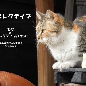 一人暮らしでも猫を飼いたい!ペットを飼いたい!を叶える家を作りたい!!