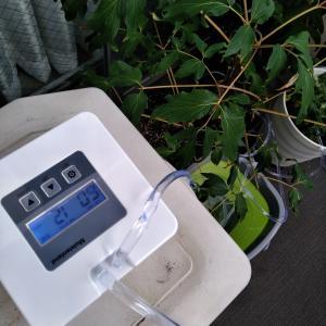 自動で植物に水をやる機械を買ってみた