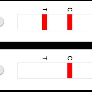 イムノクロマト法【簡易検査キットの仕組み】