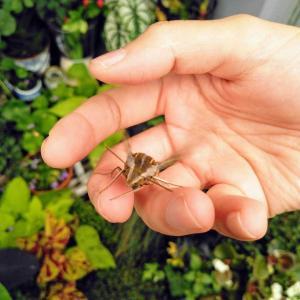 蛾が好きなんです。