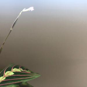 何の花でしょうか?🙃