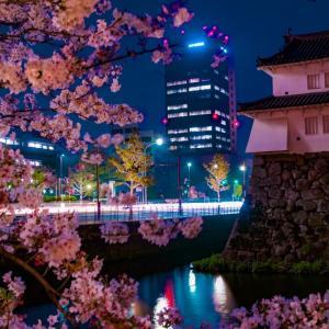 こんなにも違う!sonyα7Ⅱで「最新レンズvsオールドレンズ」夜桜とチューリップを撮影してきた