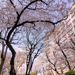 春がやってきた。