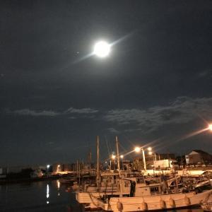 今夜は満月、フラワームーン