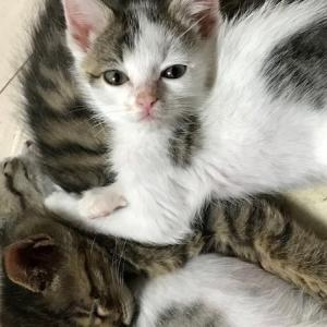 猫の世話をするホームレスを集団リンチ殺人 少年法に捉われない実名報道と厳罰を求める署名