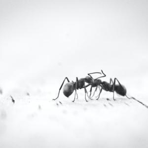 アリ退治に効果あり!アリの巣コロリを使ってみた感想
