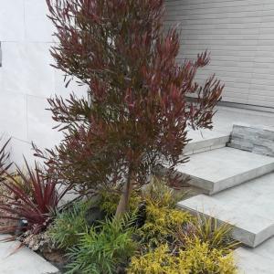 紅葉するけど常緑樹 こだわりの植栽選びの参考に