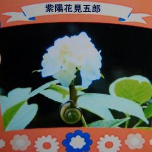 睡蓮の花が見頃を迎えました