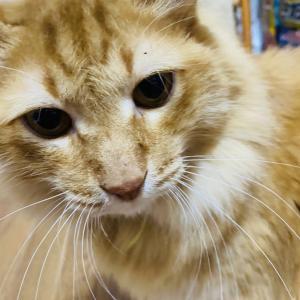 猫のおうちMIKEさん【選べるデザイン猫グッズ】沖縄の保護猫カフェ